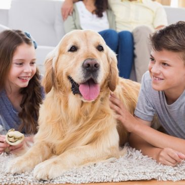 How Allergies Can be Managed to Keep Your Furry Friends at Home